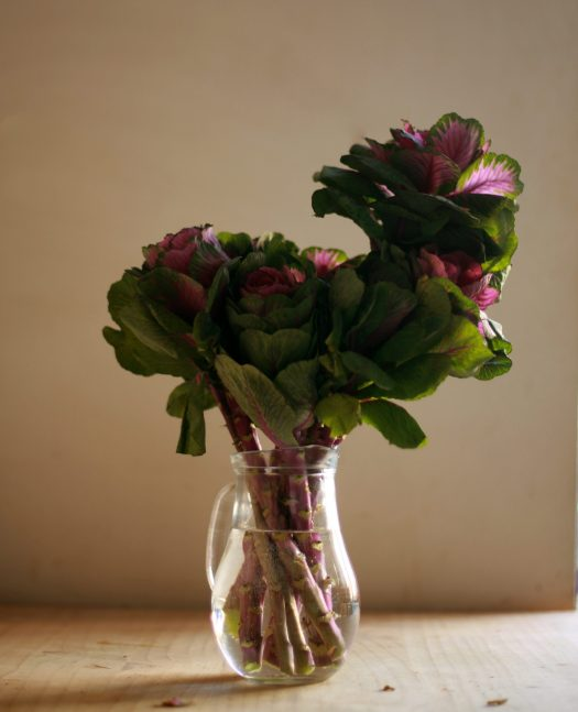 cropped-found-flowers-050-ornamental-cabbages-for-geri-1.jpg